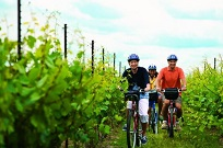 Niagara Winery Bicycle Tour with Cheese